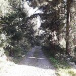 ΛΑΓΟΠΟΔΟ ΚΟΙΛΙΩΜΕΝΟΣ